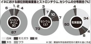 イネにおける部位別乾燥重量とストロンチウム、セヒウムの分布割合(%)