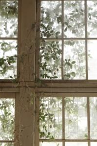 窓ガラス,保険