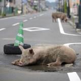 [原発20km圏内]に残された動物たち