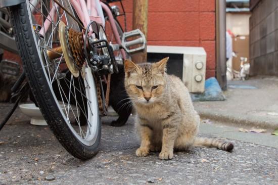 高まる「殺処分ゼロ」──猫の引き取り数と殺処分数... 高まる「殺処分ゼロ」――猫の引き取り数と