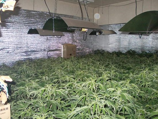 隠語 大麻