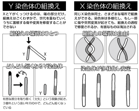 男をつくるY染色体は、やがて滅亡するかも…又吉直樹が専門家に聞く ...