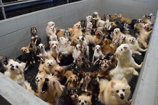 たい の ペット の ショップ 買い 犬 売れ残り を